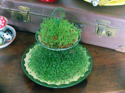Essbare Tischdeko – krasse Kresse